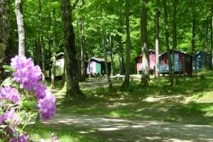 camping foto's zon en groen 016